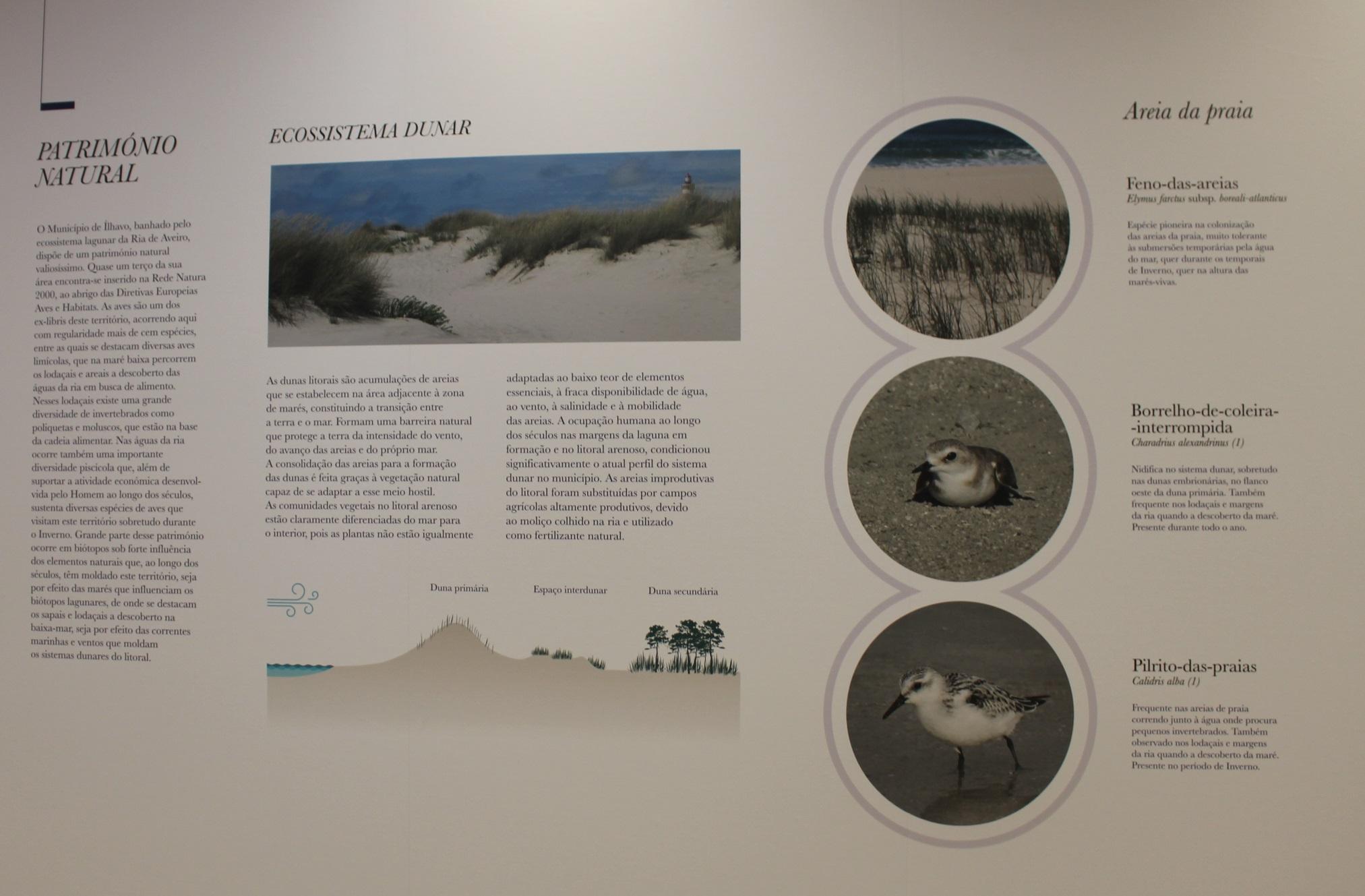 Património natural - sistema dunar