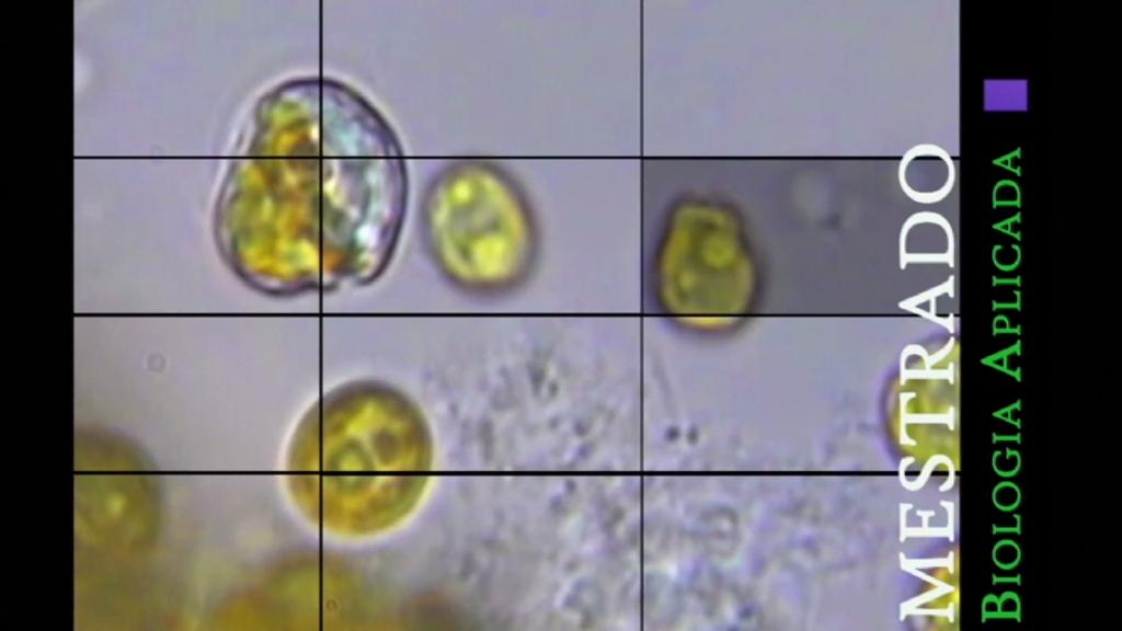 Mestrado Biologia Aplicada